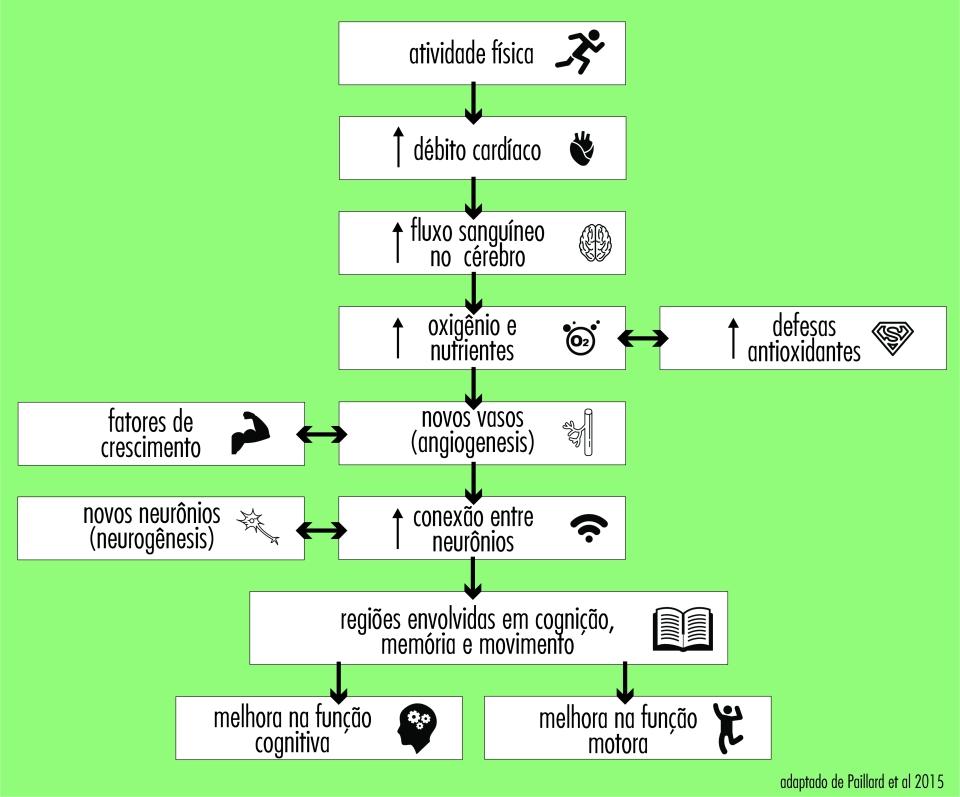 exercicio e cérebro
